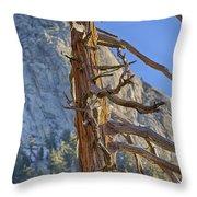 Beetle Barren Pine Throw Pillow