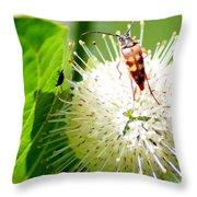 Beetle On Buttonbush Throw Pillow