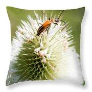 Beetle On White Spiky Wild Flower Throw Pillow