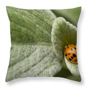 Beetle Pad Throw Pillow