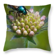 Beetle Sitting On Flower Throw Pillow