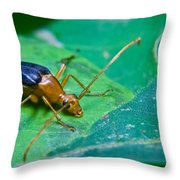 Beetle Sneeking Around Throw Pillow