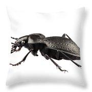 Beetle Species Carabus Coriaceus Throw Pillow