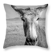 Begging Burro Throw Pillow