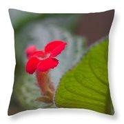 Episcia Flower Throw Pillow