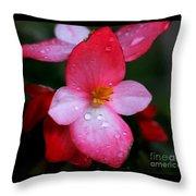 Begonia Throw Pillow