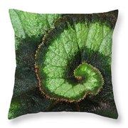 Begonia Leaf 2 Throw Pillow