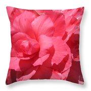 Begonia Named Non-stop Pink Throw Pillow