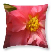 Begonia Named Nonstop Pink Throw Pillow