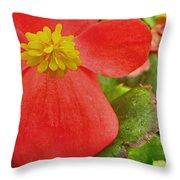 Begonia Volumia Throw Pillow