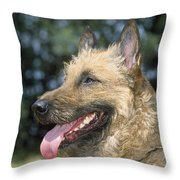 Belgian Laekenois Dog Throw Pillow