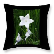 Bellflower - Campanula Carpatica Throw Pillow