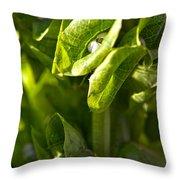 Bells Of Ireland Plant Throw Pillow