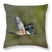 Belted Kigfisher Female Flying Throw Pillow