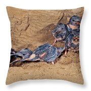 Belted Kingfisher Feeds Young Throw Pillow