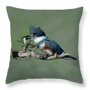 Belted Kingfisher Hen With Fish Throw Pillow