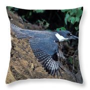 Belted Kingfisher Leaving Nest Throw Pillow