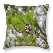 Belting Belted Throw Pillow