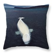 Beluga Whale Stranded At Low Tide Throw Pillow