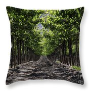 Beneath The Vines Throw Pillow