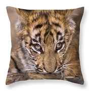 Bengal Tiger Cub And Peacock Feather Endangered Species Wildlife Rescue Throw Pillow