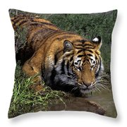 Bengal Tiger Drinking At Pond Endangered Species Wildlife Rescue Throw Pillow