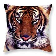 Bengal Tiger Eye To Eye Throw Pillow