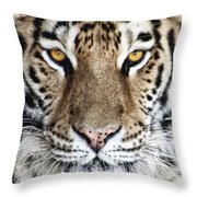 Bengal Tiger Eyes Throw Pillow