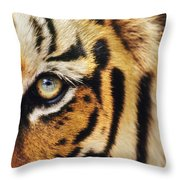 Bengal Tiger Face Throw Pillow