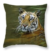 Bengal Tiger In Water Native To India Throw Pillow