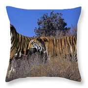 Bengal Tigers On A Grassy Hillside Endangered Species Wildlife Rescue Throw Pillow