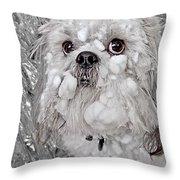 Benji Throw Pillow by David Kehrli