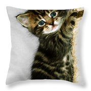 Benny The Kitten Playing Throw Pillow