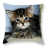 Benny The Kitten Resting Throw Pillow