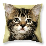 Benny The Pussy Cat Throw Pillow