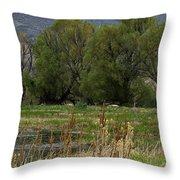 Benson Pond Throw Pillow