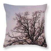 Bergen  Winter Tree Throw Pillow by Hakon Soreide