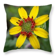 Berlandiera Lyrata Throw Pillow
