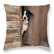Bernese Mountain Dog At Log Cabin Door Throw Pillow