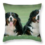 Bernese Mountain Dogs Throw Pillow