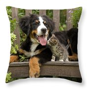 Bernese Mountain Puppy & Kitten Throw Pillow