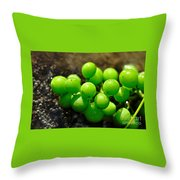 Berries On Water Throw Pillow