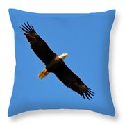 Best Bald Eagle On Blue Throw Pillow