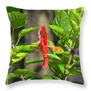 Best Close-up Green Hummingbird On Red Hibiscus Flower. Throw Pillow