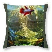 Betta Fish Moby Dick Throw Pillow