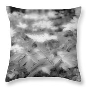 Between Black And White-14 Throw Pillow