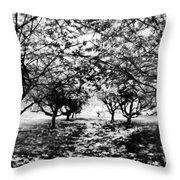 Between Trees II Throw Pillow
