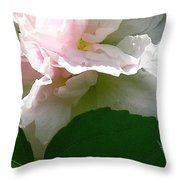 China Rose 2 Throw Pillow