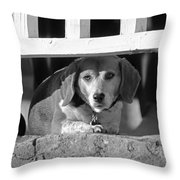 Beware - Guard Beagle On Duty In Black And White Throw Pillow by Suzanne Gaff