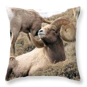 Big Bighorn Ram Throw Pillow